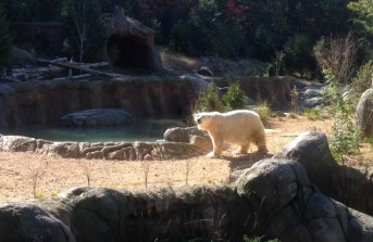 NC Zoological Park Polar Bear Exhibit Expansion / Renovation, Asheboro, NC
