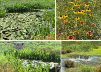 Wetlands and Stormwater Management Control